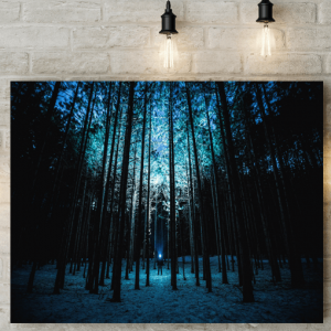 Night Shining Forest Picture Canvas