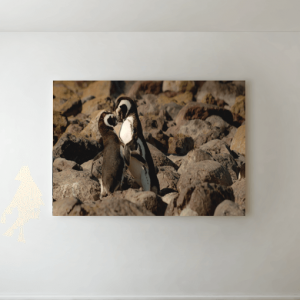 Kissing Penguins Picture Canvas