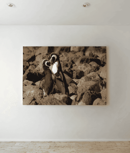 [tag] Kissing Penguins Picture Canvas