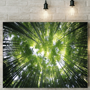 Sunlight Through The Trees Picture Canvas