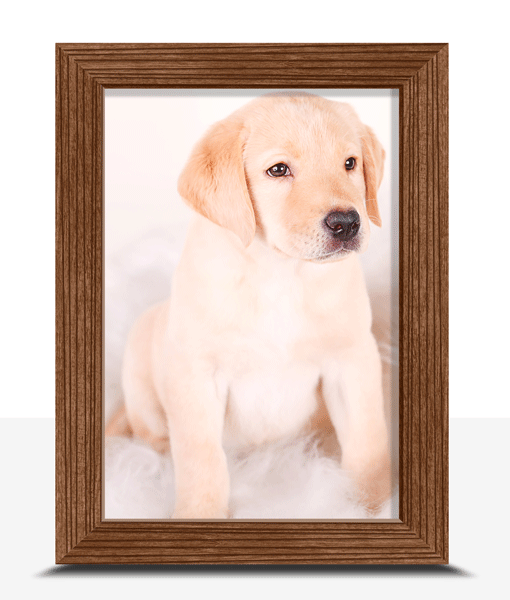 6″ X 4″ Framed Photo Print